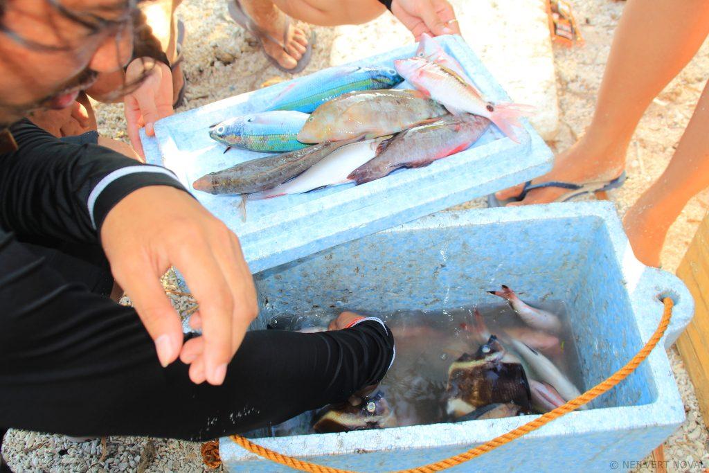 Fish. Kalaggaman Island.
