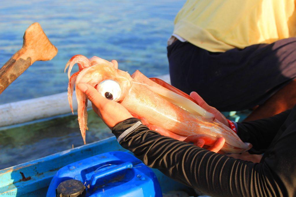 Squid. Kalaggaman Island.